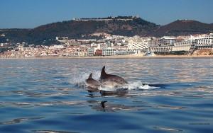 sesimbra-golfinhos